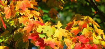 Celebrating The First Day Of Fall: Let's Talk Colors